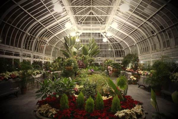 Westmount greenhouse - click to enlarge
